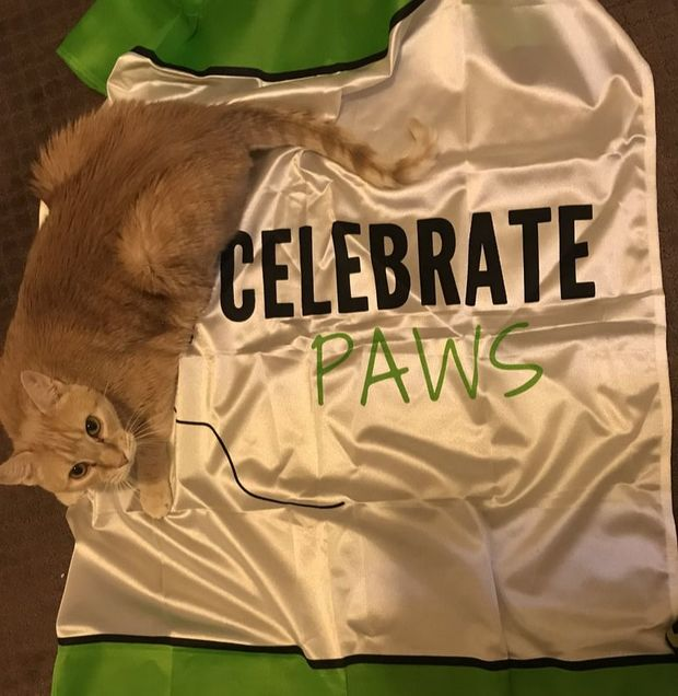 Celebrate Paws Rescue Sheletr dog Shelter cat Animal rescue Humane society